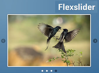 FlexSlider jQuery Slider Plugin