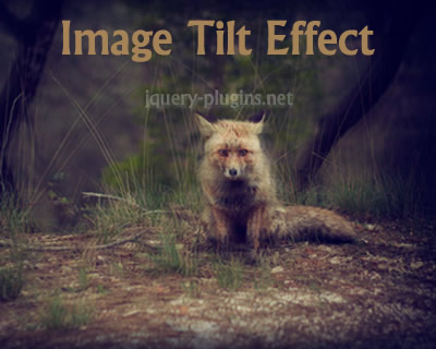 Image Tilt Effect with CSS and Javascript